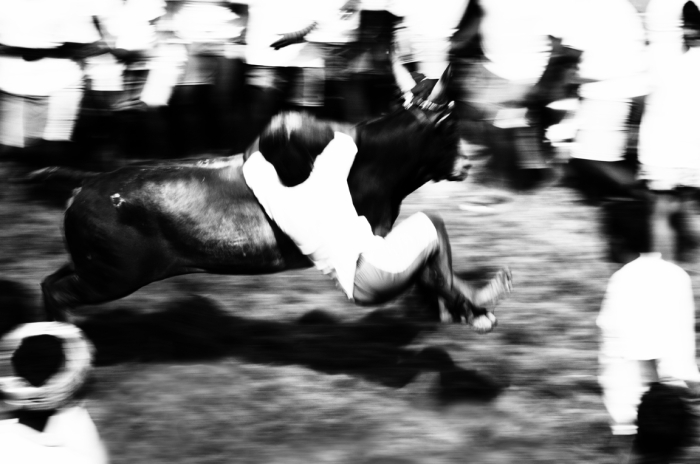 The Gods That Run: Cons of Jallikkattu